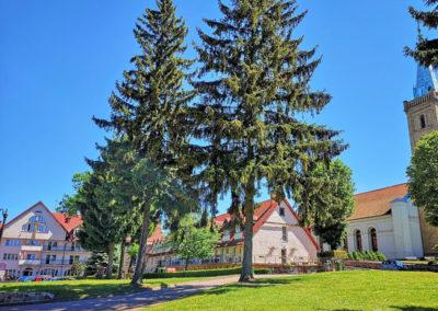 ARKA Mikołajki - ogród i okolica